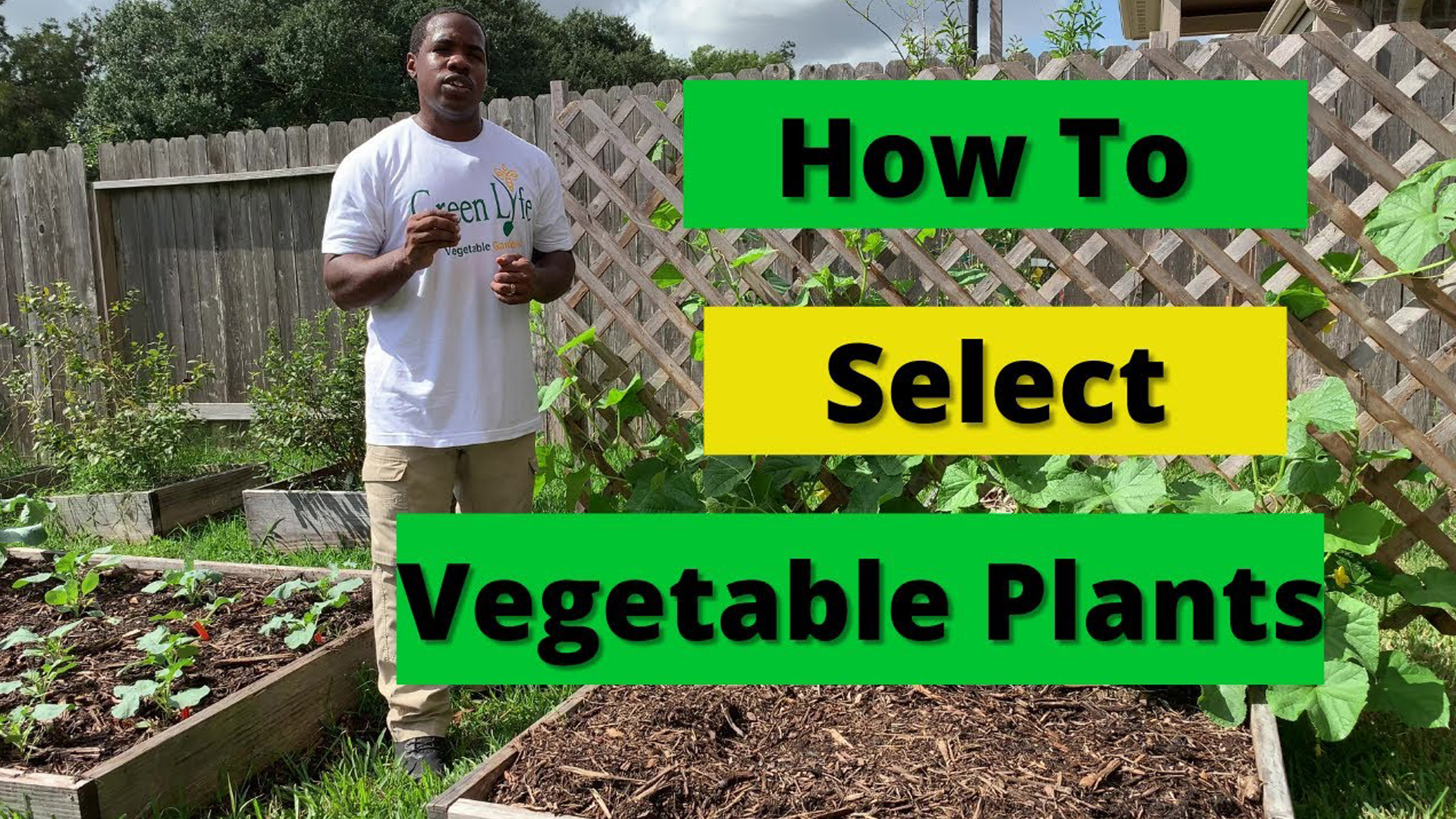 How To Select Vegetable Plants